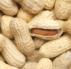 Food Allergen information resources