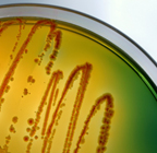 General microbiology information resources