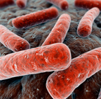 Foodborne Pathogen information resources